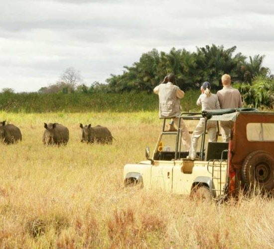 Le Migliori Agenzie Safari