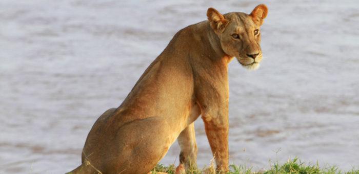 Le elezioni non frenano il turismo dei safari