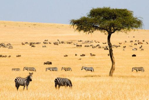 Kenya tra i primi dieci paesi da visitare