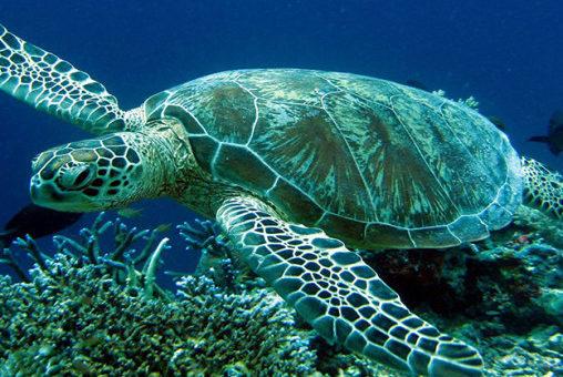 Lamu lasciateci mangiare le tartarughe