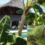 Splendida villa in Kenya - Malindi