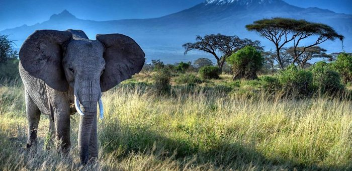Qual è il motivo principale per cui vi manca il Kenya?